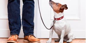 Curso Adiestrador Canino Granada