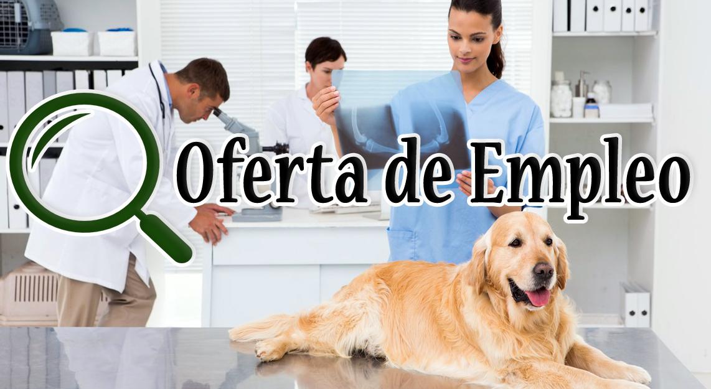 Oferta de empleo Ayudante técnico Veterinario